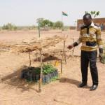 Plantation de Moringa en attente