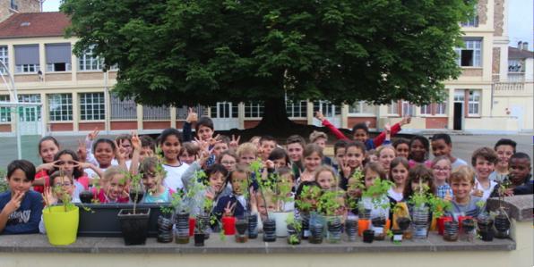 Plants de moringa en provenance du Burkina à l'école Paul Fort/David Régnier